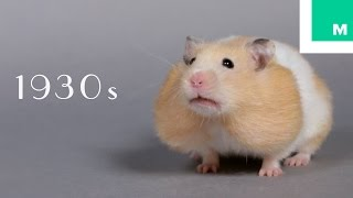 100 Years of Hamster Beauty in 60 Seconds