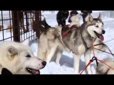 Activités nordiques, raquettes, ski et husky... à Mouthe dans le Doubs
