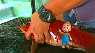 Video SI OTAN | WARNA WARNI AQUARIUM (03/07/18) 1-3 MP3, 3GP, MP4, WEBM, AVI, FLV Januari 2019