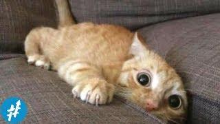 Video Gemesin Banget, 7 Kucing Lucu TERPOPULER Di Instagram Ini Wajib Kamu Follow MP3, 3GP, MP4, WEBM, AVI, FLV Februari 2019