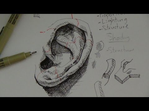 Pen & Ink Drawing Tutorials | How to draw a realistic ear