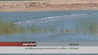 بالفديو … في الديوانية النهر الثالث.. منطقة جذب للسياحة والصيد البري