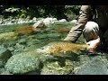 Fly Fishing for New Zealand TROUT - On one the finest backcountry rivers around.