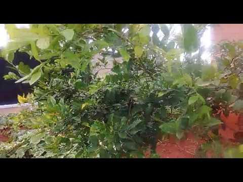 Como cultivar alimentos orgânicos no quintal de sua casa