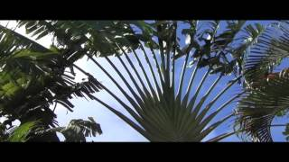 A walk though the beautiful Barbados Andromeda Gardens. A tropical garden on east coast of Barbados in the parish of St Joseph...