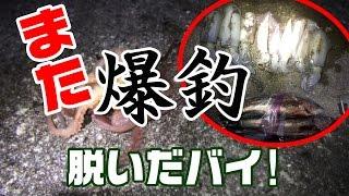 エギング2016 春イカ 平戸編|シティーコムTV(japanese fishing report)