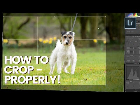 HOW TO USE THE CROP TOOL in Lightroom - Episode 1 - Terrier Dog Photo Editing Series
