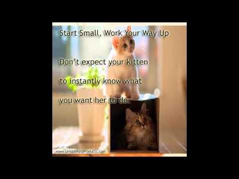 basic cat training tricks