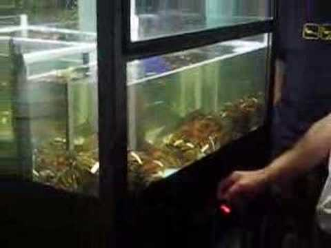 Bizarre Japanese Arcade Game: Live Lobster Catcher picture