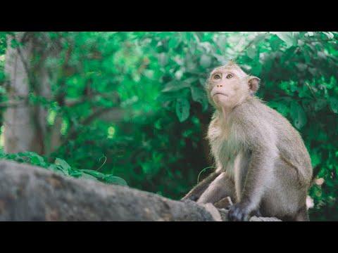 Visit Sangeh Monkey Forest
