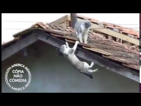 Cat Leaves Enemy Fall To Death (Epic Cat Fight)