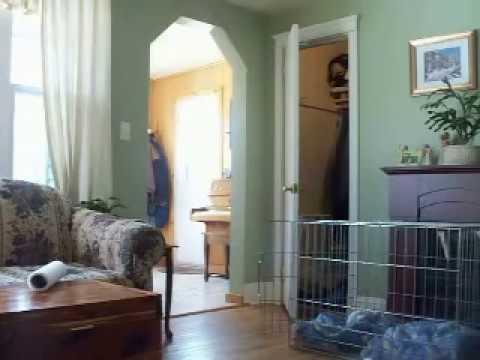 i cani e la radio della cucina subiscono strani fenomeni innaturali!