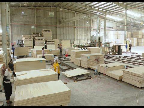 Yên Bái đẩy mạnh phát triển sản phẩm gỗ rừng trồng
