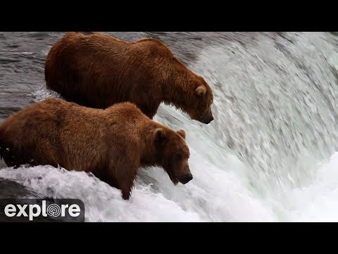 Live-Cam: Braunbären - Brooks Falls - Katmai National ...