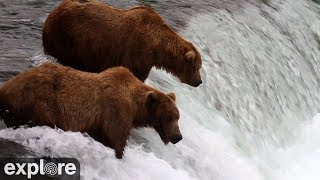 Video Brooks Falls - Katmai National Park, Alaska powered by EXPLORE.org MP3, 3GP, MP4, WEBM, AVI, FLV Agustus 2017