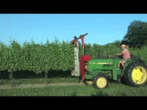 Hedging The Vines