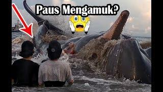 Video Detik-Detik Ikan Paus Mengamuk di Ujong Batee I Killer Whale - Aceh Darussalam MP3, 3GP, MP4, WEBM, AVI, FLV Oktober 2018