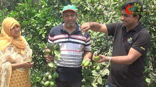 সীডলেস লেবু( Seedless Lime)-...