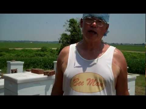 Bee Pollen Questions – Myth or Truth