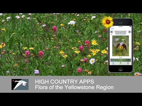 Video of Colorado Rocky Mtn Wildflowers