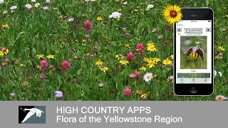 Flora of Yellowstone Intro YouTube video