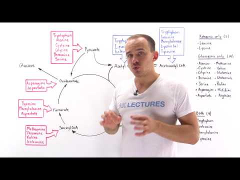 AK LECTURES - Introduction to glucogenic and ketogenic ...