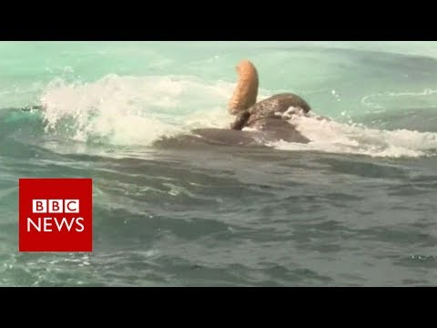 Elephant Found Swimming out at Sea