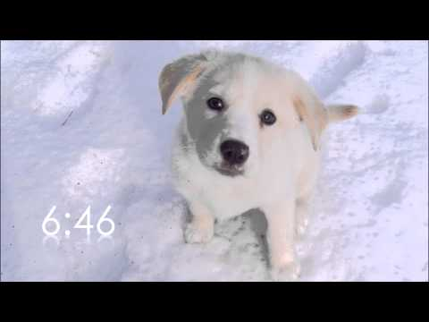 Video 20 minute countdown: dog countdown download in MP3, 3GP, MP4, WEBM, AVI, FLV January 2017