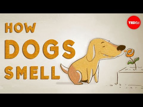 How do dogs smell?
