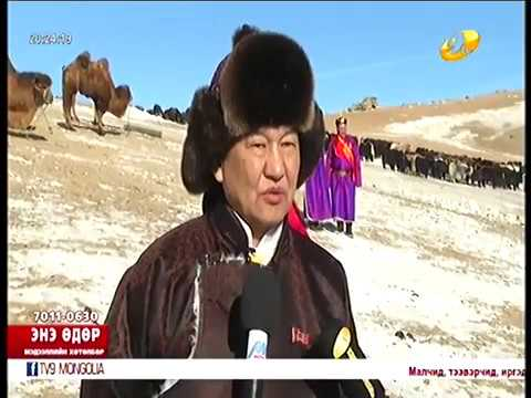 Аварга малчин Г.Сүхбаатар Цагаан-Уул үүлдрийн хонио өсгөн үржүүлж байна