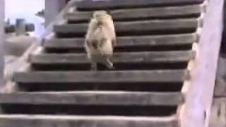 Un Video Para El Mejor Amigo Del Hombre