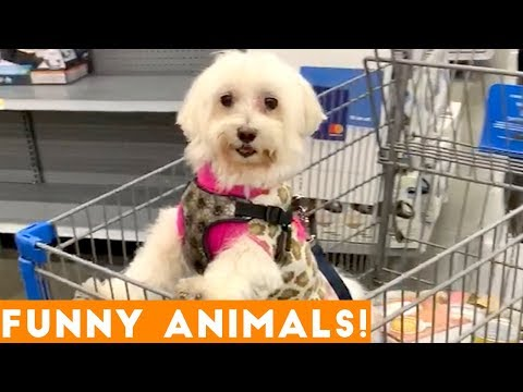 Funny cat videos - Funniest Pets & Animals of the Week Compilation November 2018  Funny Pet Videos