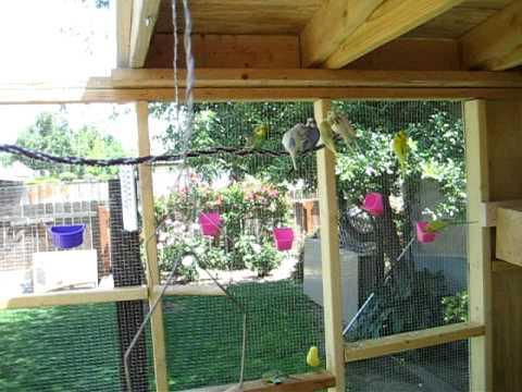 Parakeet new 8x10 backyard aviary.