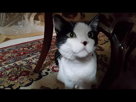 gatto-lamico-del-cuore