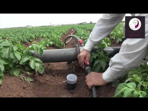 مشروع زراعة البطاطا في الداخل السوري