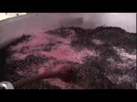 red wine fermentation