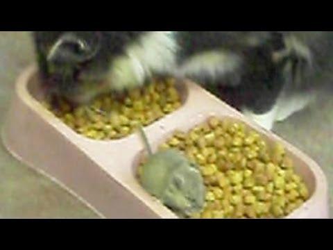 gatto-e-topo-dividono-la-ciotola