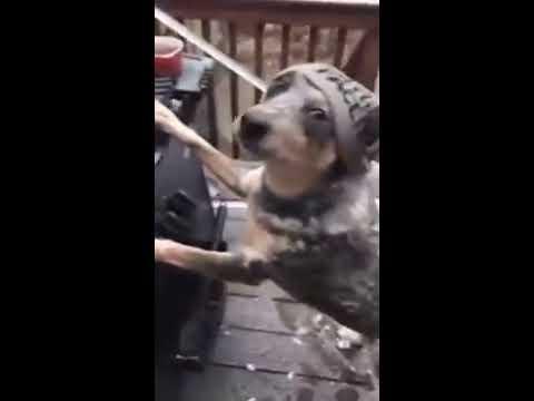 VIDEO: Jak vypadá pracovní den psího manekýna?