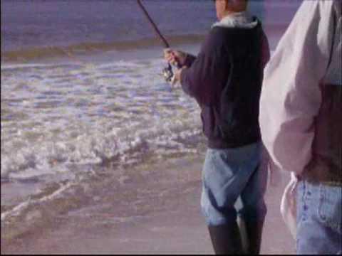 35 lb Black Drum Caught at Gulf Shores, AL