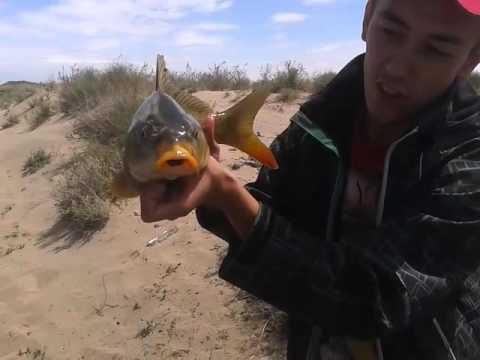 казахстан рыбалка видео сазан