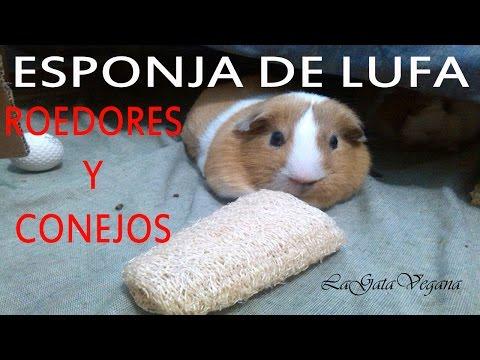 Esponja natural de lufa juguete para roedores y conejos barato y casero - Juguetes caseros para conejos ...