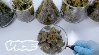 Daniel Yazbec explains his app Cdx, a pocket-sized laboratory that allows you to know the exact chemical composition of your weed, and which strain is right for you.Click here to subscribe to VICE: http://bit.ly/Subscribe-to-VICECheck out our full video catalog: http://bit.ly/VICE-VideosVideos, daily editorial and more: http://vice.comMore videos from the VICE network: https://www.fb.com/vicevideoLike VICE on Facebook: http://fb.com/viceFollow VICE on Twitter: http://twitter.com/viceRead our Tumblr: http://vicemag.tumblr.comFollow us on Instagram: http://instagram.com/viceCheck out our Pinterest: https://pinterest.com/vicemagDownload VICE on iOS: http://apple.co/28VgmqzDownload VICE on Android: http://bit.ly/28S8Et0