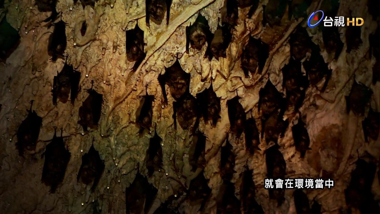 探索科學危機解碼 #05 蝙蝠預告