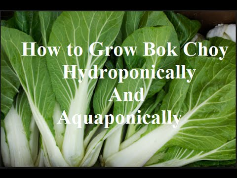 How to Hydroponics: Easy Bok Choy, Complete Guide to Organic Aquaponic growing! pt2
