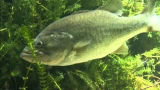 Bass fishing for beginners the bass vidinfo for Bass fishing for beginners