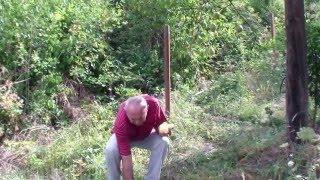 Kruška VODENJARA   - Stare sorte voća Mirko Veić