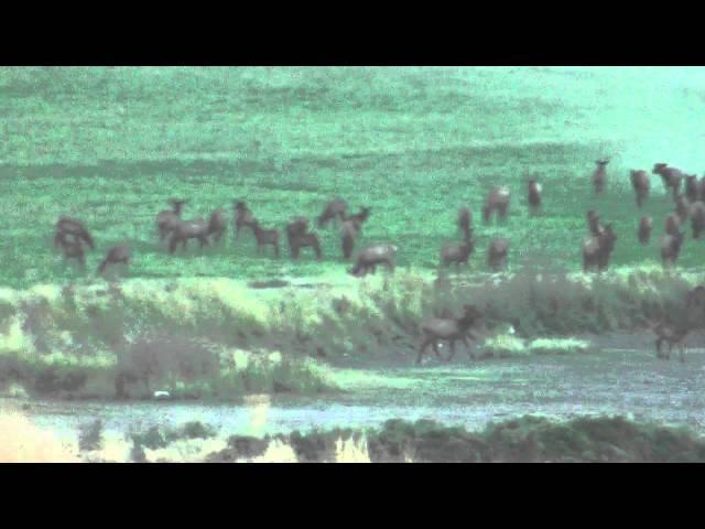 2013 Elk Video - 3
