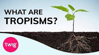 Plants - Tropism