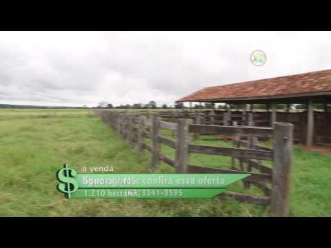 FAZENDA À VENDA EM SONORA / MS COM 1.210 HECTARES (FAZENDA DESTAQUE)