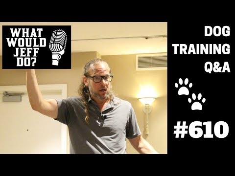 Dog Training - Reactive Dogs - Stop Dog Resource Guarding - What Would Jeff Do? Q&A  Ep.610 (2019)